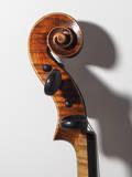 violino prokop